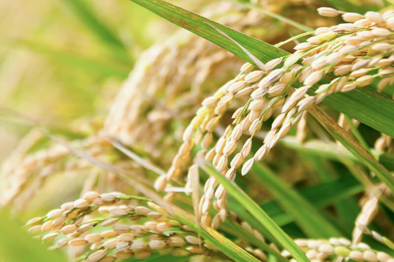 こだわりのお米が原材料